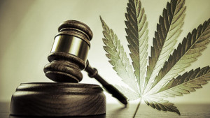 marijuana lawyer in nj