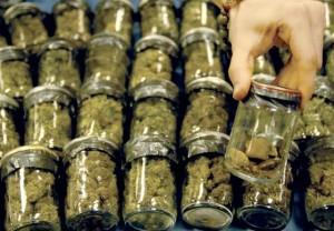 marijuana distribtution in nj